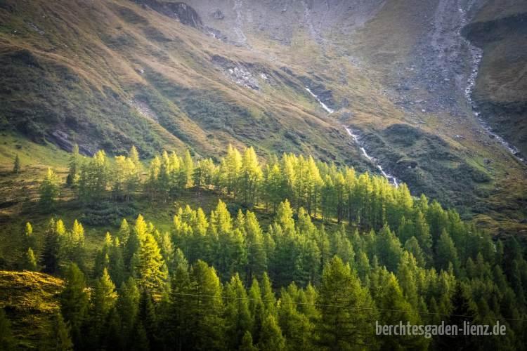Bergwald im Abendlicht