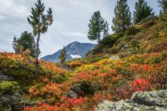 Herbstliche Kulisse